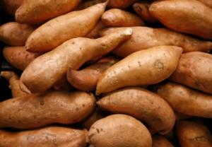 De zoete aardappel van Aljezur, in het park Costa Vicentina